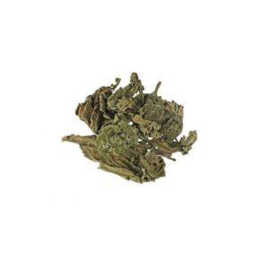 Salvia divinorum herbs of the gods