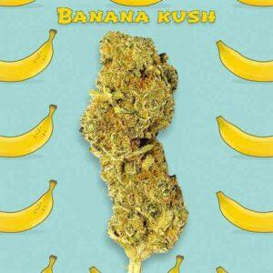 Banana Kush CBD indoor Gold Line